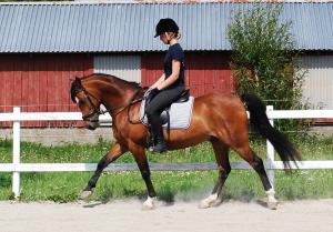 D-ponny bakåtlut & fr långt fram ev för rak sadel till rund rygg 2013