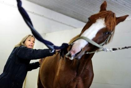 Ulrika ger behandling till häst i stallet