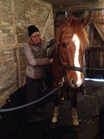 Ulrika behandlar uppställd häst